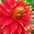 Flower at Butchart Gardens on Vancouver Island
